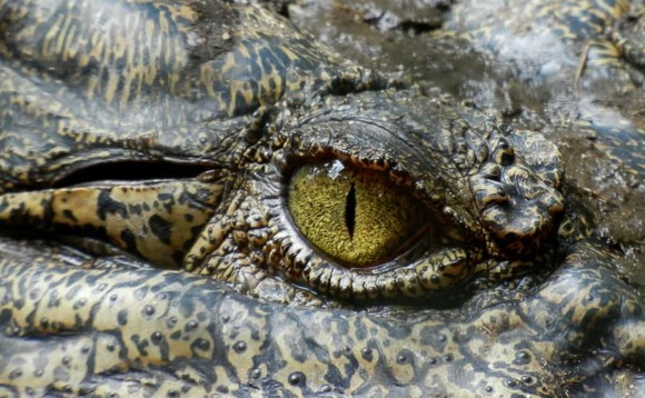 China signals intent to hunt 'financial crocodiles' to extinction